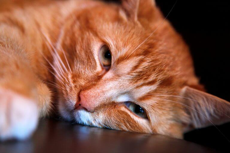 Katze langweilig