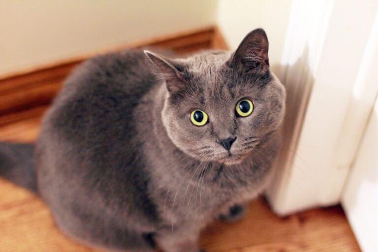 Katze kratzt Tür