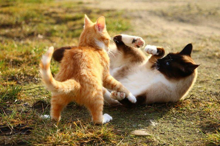 Kampf beenden Katze