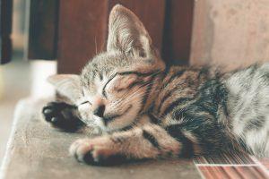 Katze eingewöhnen zuhause
