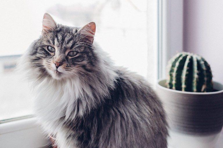 Katzensicheres Zuhause