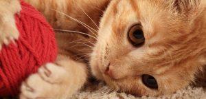 Katze Spielen Aggression