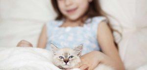 Katze Kinder